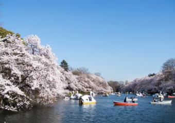 【東京】荷物を預けてお花見しよう。お花見スポット近くのecbo cloak大特集2019!