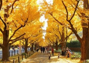 【東京】荷物を預けて、手ぶらで秋の紅葉狩り。都内の人気紅葉スポット付近のecbo cloak特集!
