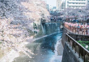 """[东京] 2020年,""""免提赏花""""! """" Ekbo斗篷""""的特殊功能,可以将行李放在樱花观景台附近"""